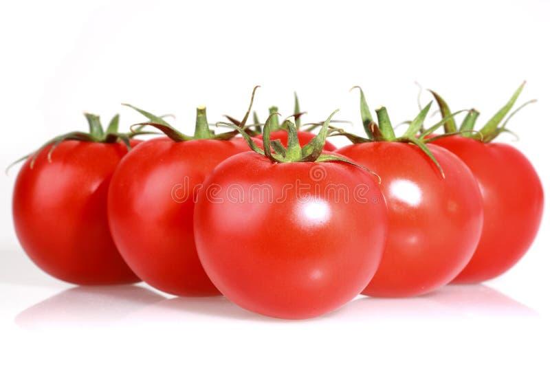 Pomodori su bianco fotografia stock
