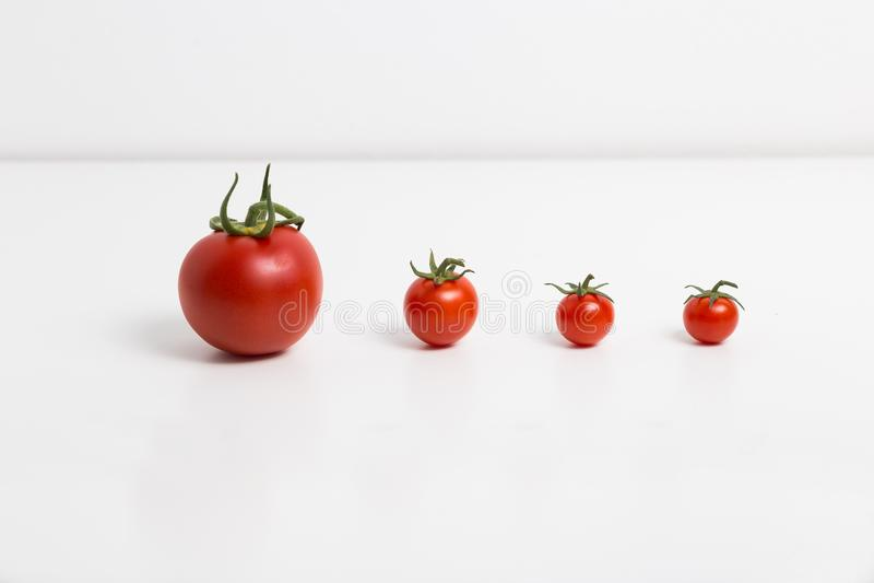 Pomodori in una fila immagini stock