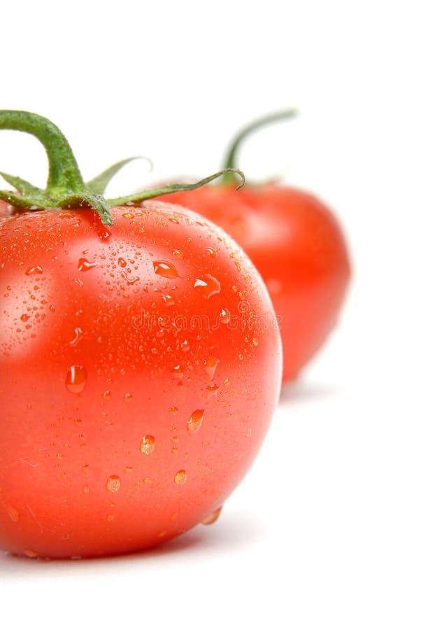 Pomodoro bagnato immagini stock libere da diritti
