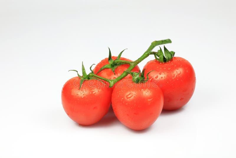 Pomodoro di ciliegia con rugiada su bianco immagine stock libera da diritti