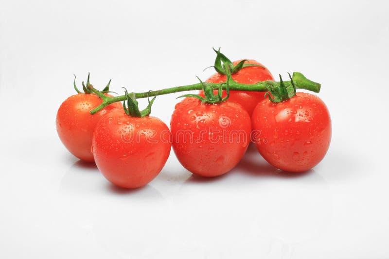 Pomodoro di ciliegia su priorità bassa bianca fotografia stock libera da diritti