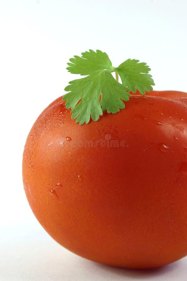 Pomodoro e coriandolo immagini stock