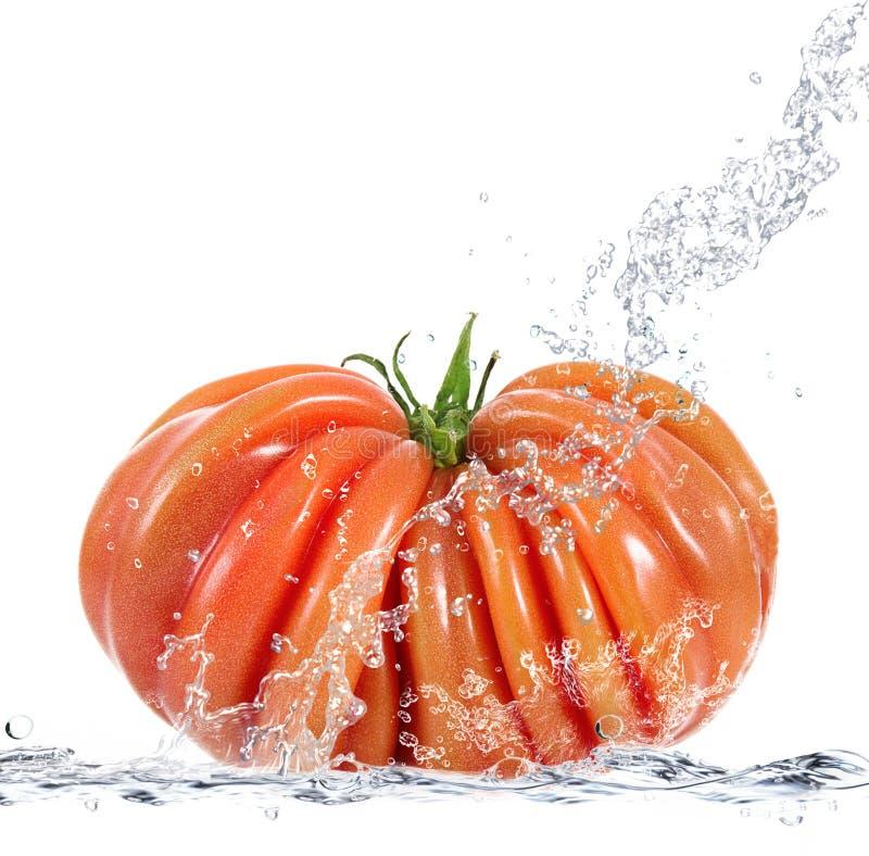 Pomodoro fresco che cade in acqua fotografia stock