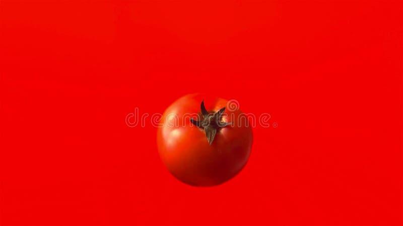 Pomodoro isolato su fondo rosso immagini stock libere da diritti