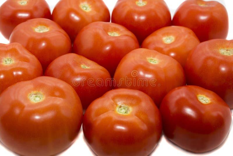Pomodoro maturo rosso fotografie stock