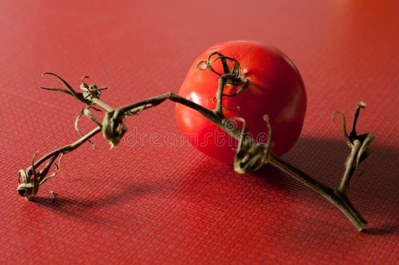Pomodoro pieno dell'uva fotografia stock libera da diritti