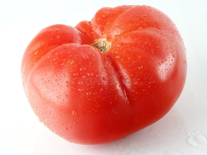 Pomodoro reale. fotografia stock