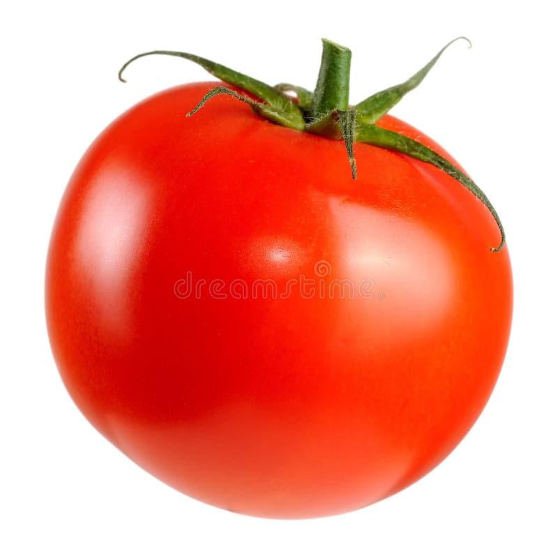 Pomodoro rosso isolato su priorità bassa bianca immagine stock libera da diritti