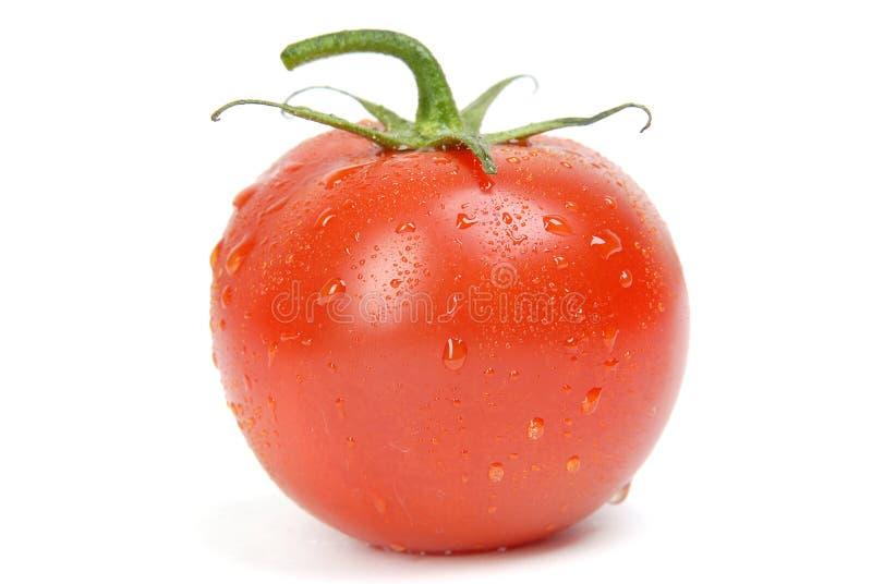 Pomodoro singolo fotografia stock