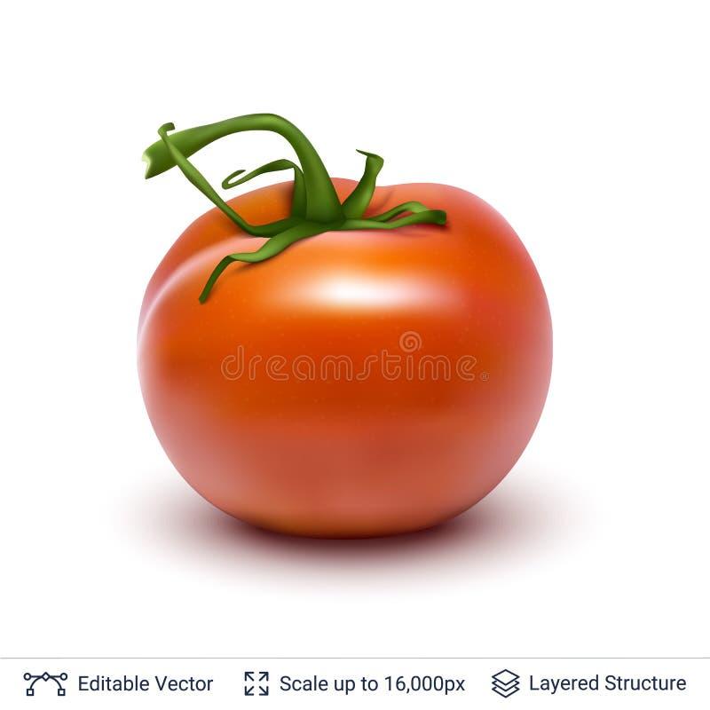 Pomodoro su bianco illustrazione vettoriale