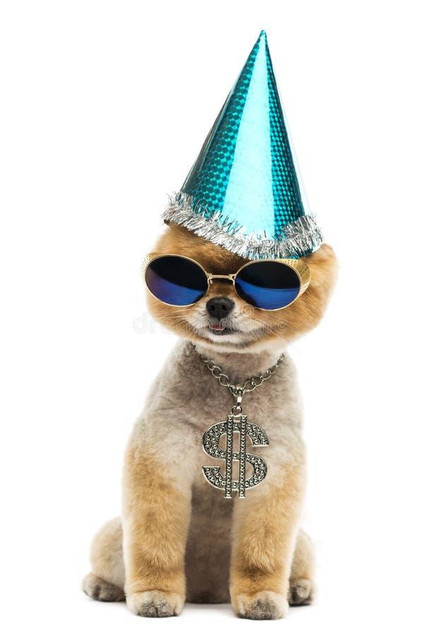 Pomorzanki psia jest ubranym dolarowa kolia, błękitni okulary przeciwsłoneczni i część, obraz royalty free