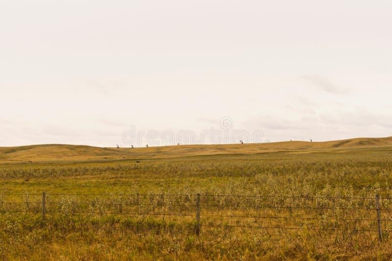 Pompe di olio su un orizzonte distante fotografia stock