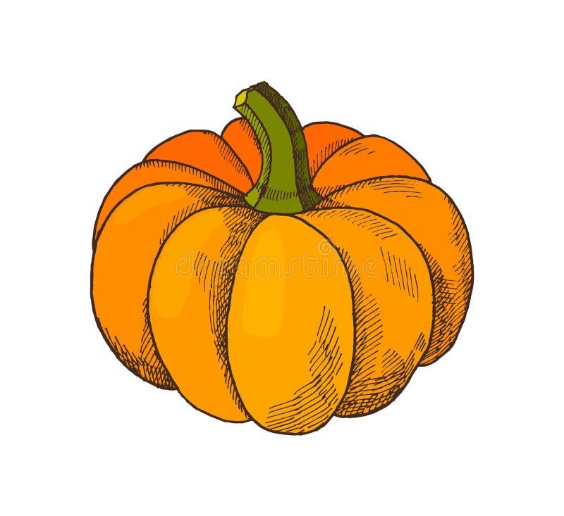 Pompoen Autumn Harvesting Season Isolated Vector vector illustratie