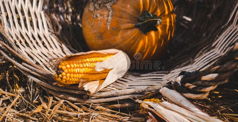 Pompoen en maïs in mandje stock fotografie