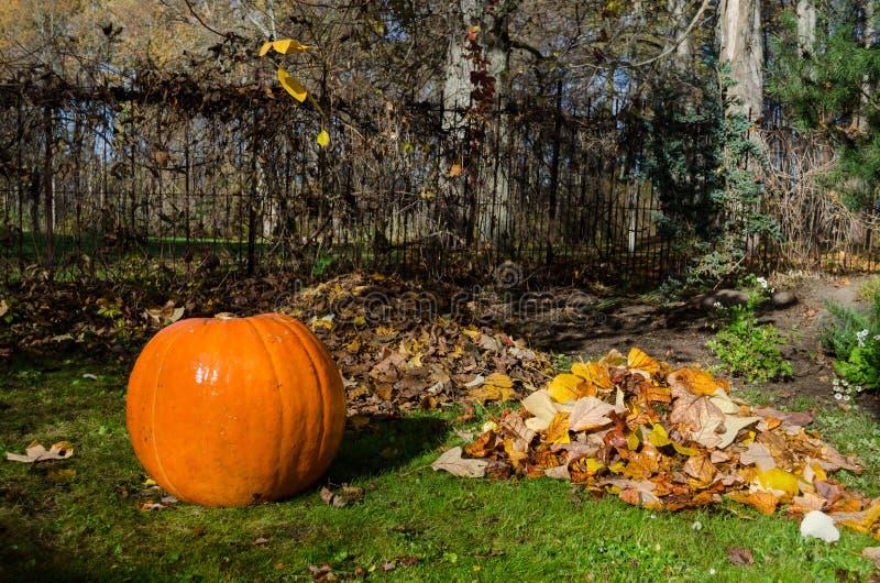 Pompoen en stapel droge bladeren Herfst Concept royalty-vrije stock afbeeldingen