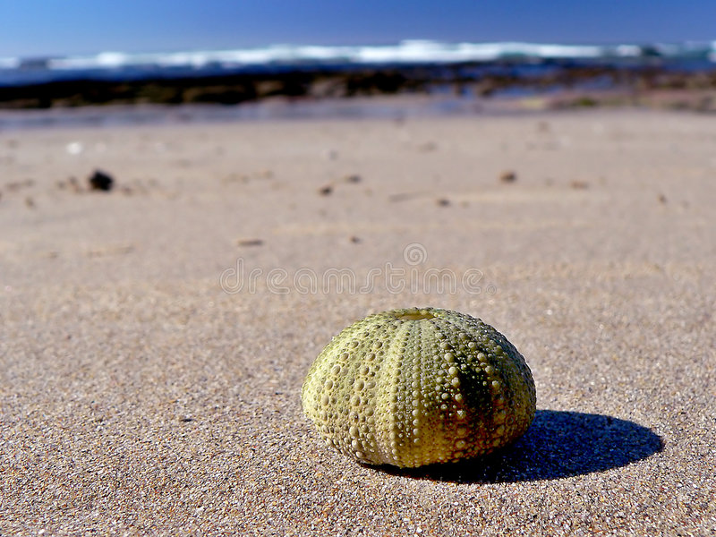 Pompoen Shell royalty-vrije stock foto's
