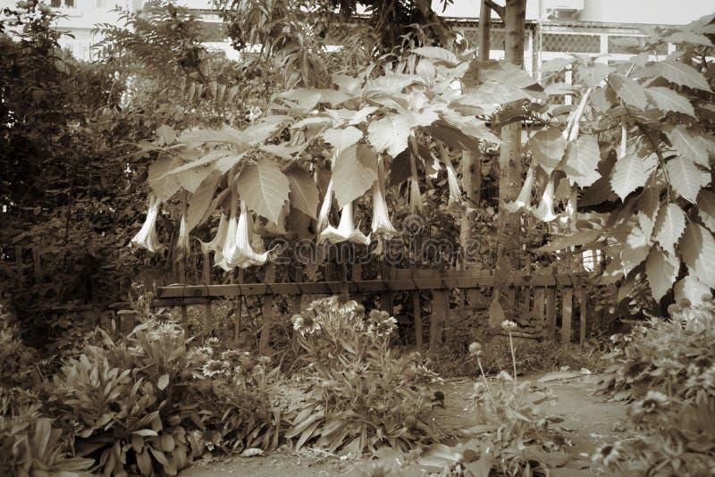 Pompoenbloemen royalty-vrije stock fotografie