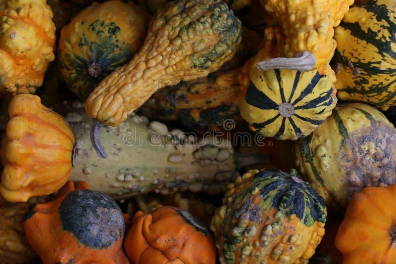 pompoenen stock foto's