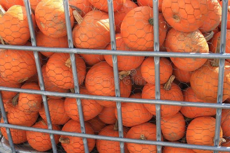 Pompoenen stock afbeelding