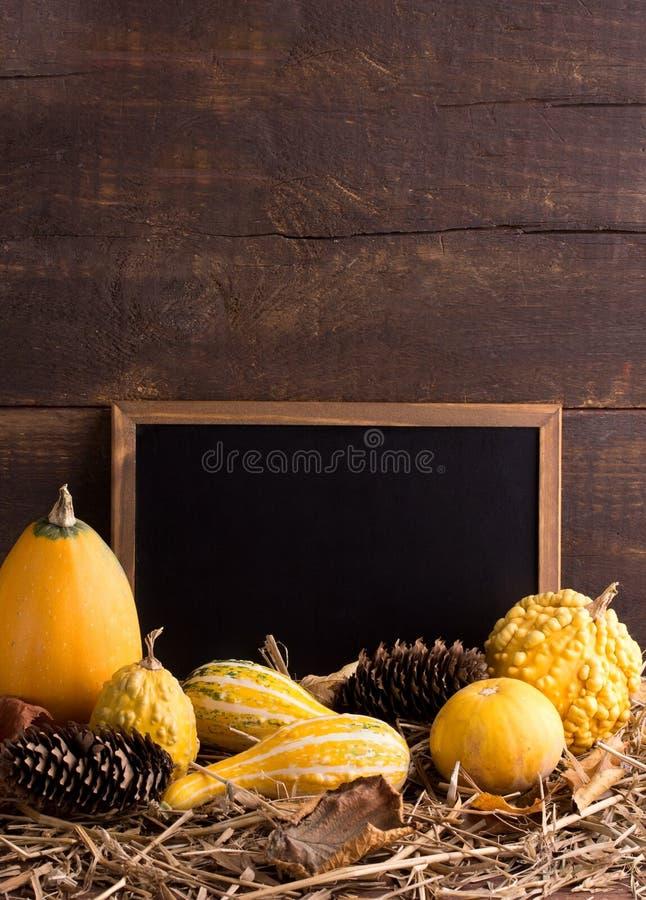 Pompoenen stock afbeeldingen