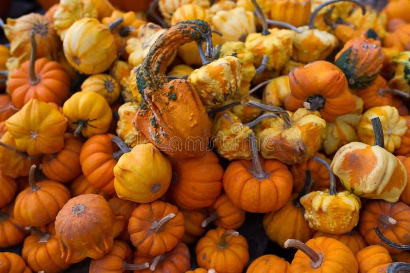 Pompoenen en Pompoenen stock afbeeldingen