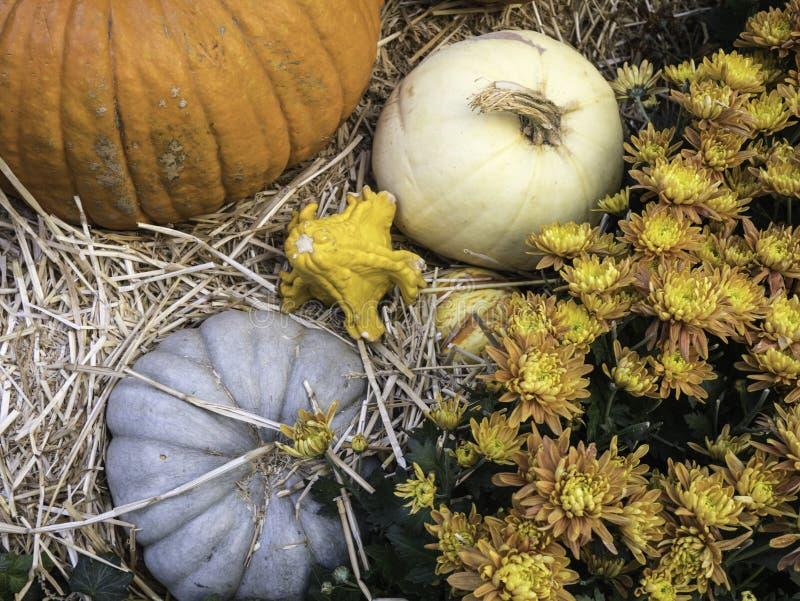 Pompoenen en Chrysanten stock foto