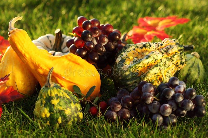 Pompoenen en druiven in het gras royalty-vrije stock afbeelding