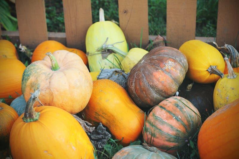 Pompoenen voor verkoop Amerikaanse landbouwbedrijf en schuren bij de herfst in Illinois royalty-vrije stock afbeeldingen