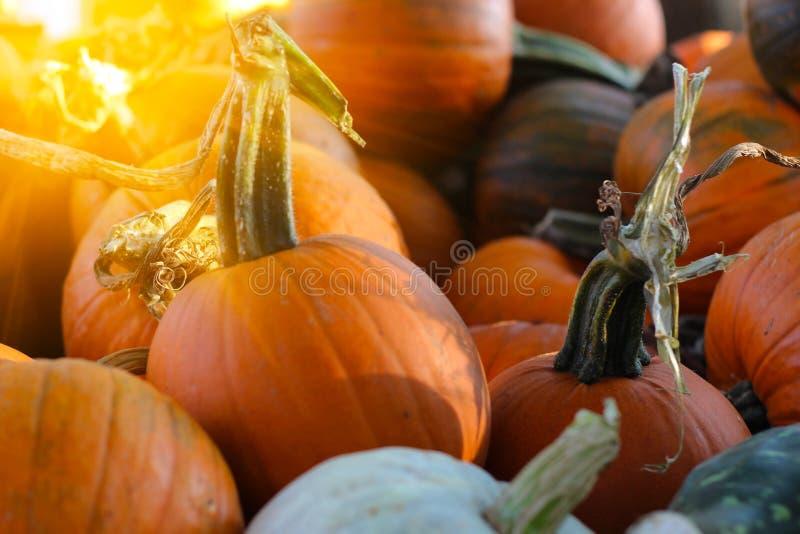 Pompoenen voor verkoop bij landbouwersmarkt stock fotografie