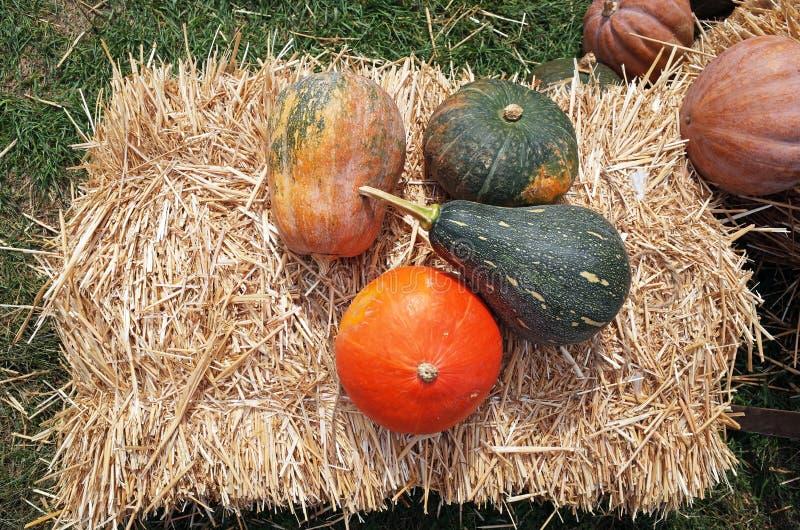 Pompoenoogst in de herfst royalty-vrije stock afbeeldingen