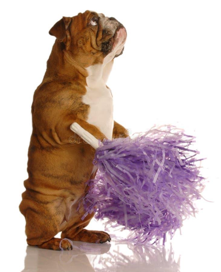 pompoms собаки чирлидера стоковое фото