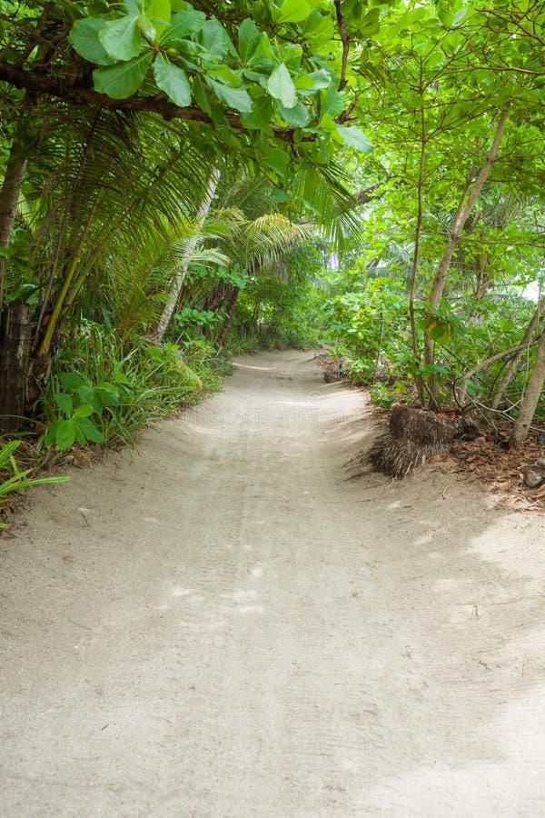 Download Poncez La Route à La Plage Dans La Forêt Tropicale Photo stock - Image du rural, voie: 87701270