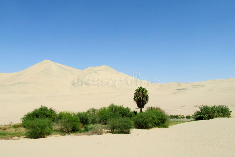 Poncez les dunes de désert et l'oasis verte avec les buissons et le palmier images libres de droits