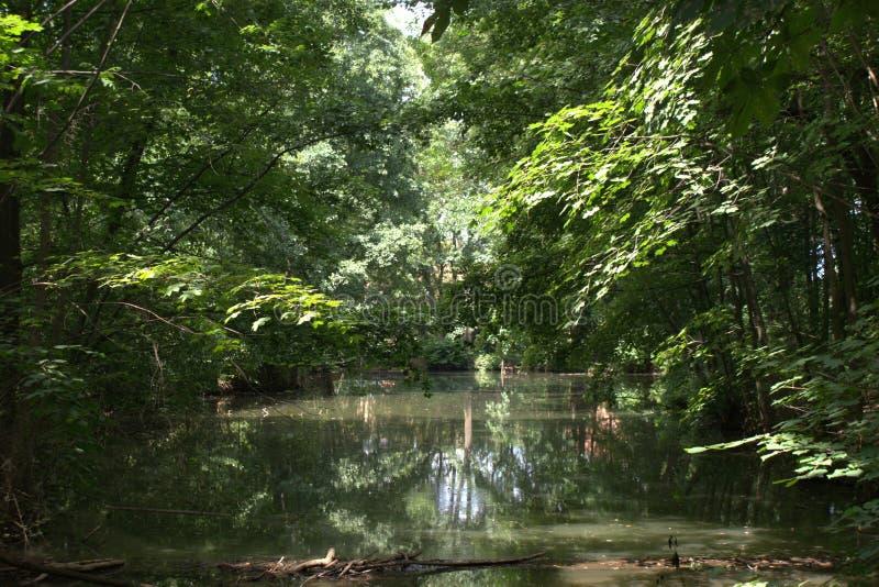Pond при низкие ветви дерева смертной казни через повешение отражая в воде и солнечном свете разливая внутри стоковое изображение rf