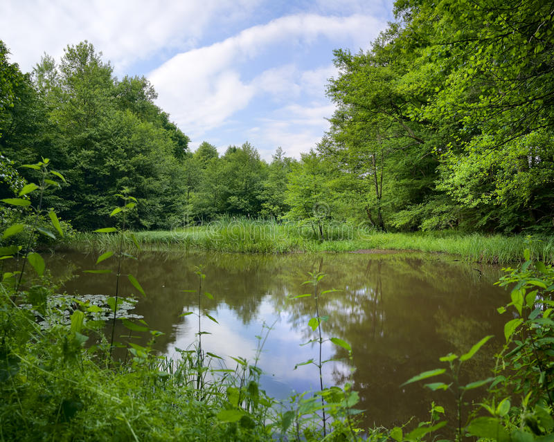 Pond. View of a small pond in the forest, summer,XXL, Saarland / Germany stock image