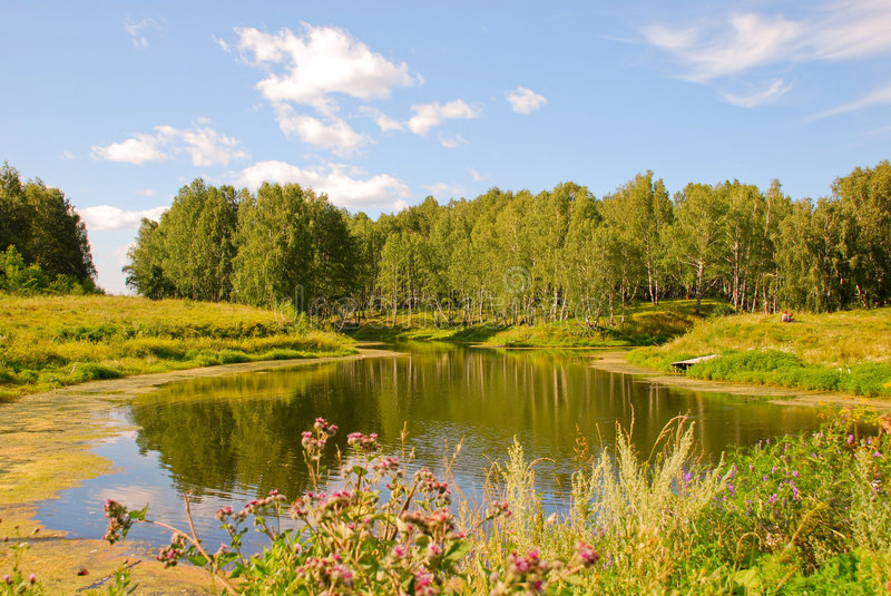 Pond. A small pond and a lot of grass stock image