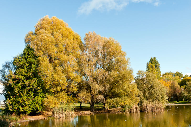Download Pond in Autumn stock image. Image of foliage, ducks, beach - 21828857