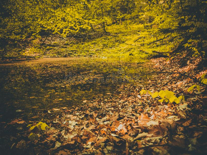 The pond is in autumn bathed in colorful leaves royalty free stock images