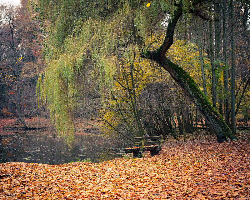 Pond In The Autumn Park Royalty Free Stock Photography
