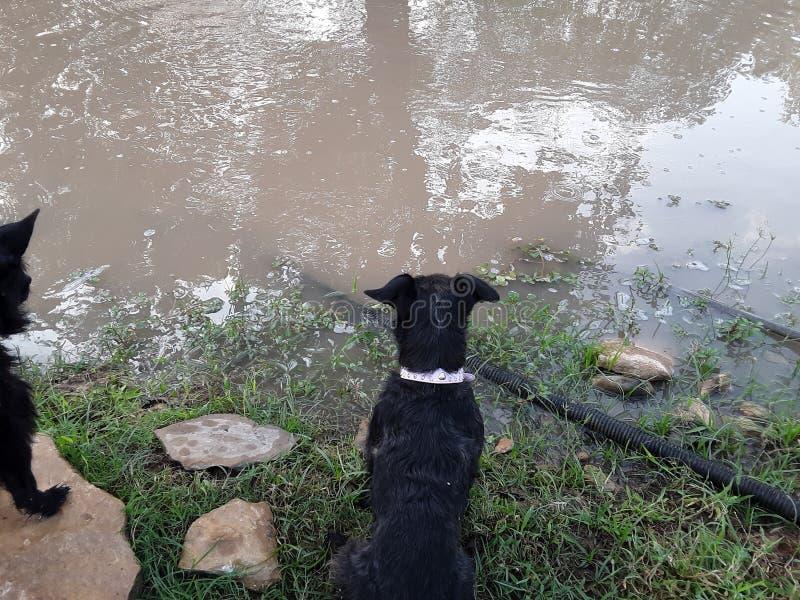 Pond Backyard con mi cachorro fotos de archivo libres de regalías