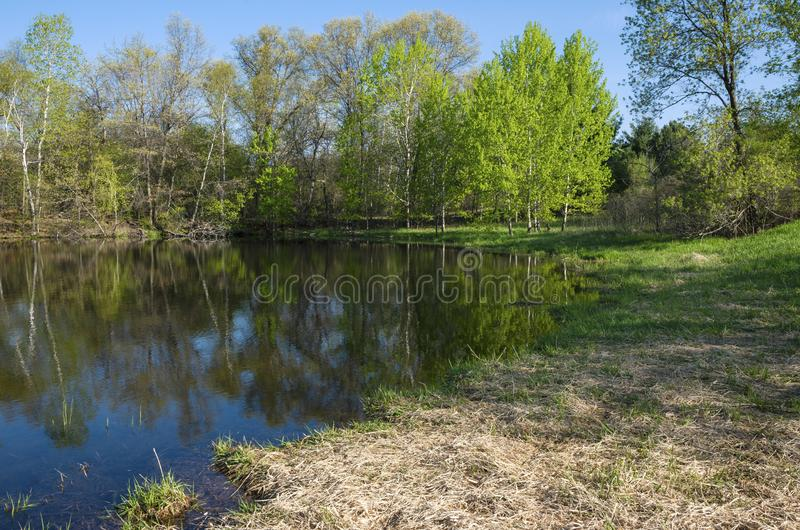 Pond Bank at Edge of Forest in Salem Hills. Along pond bank at edge of forest in salem hills park inver grove heights minnesota royalty free stock photo