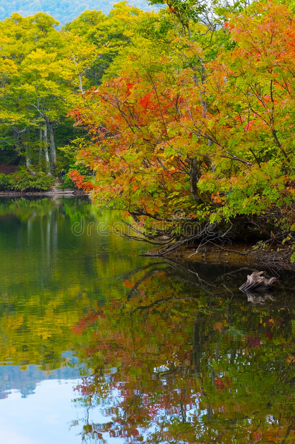 Download Pond in beech forest. stock photo. Image of autumn, stroll - 27372018