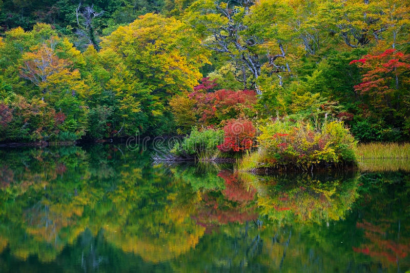 Download Pond in beech forest. stock photo. Image of water, walking - 27372184