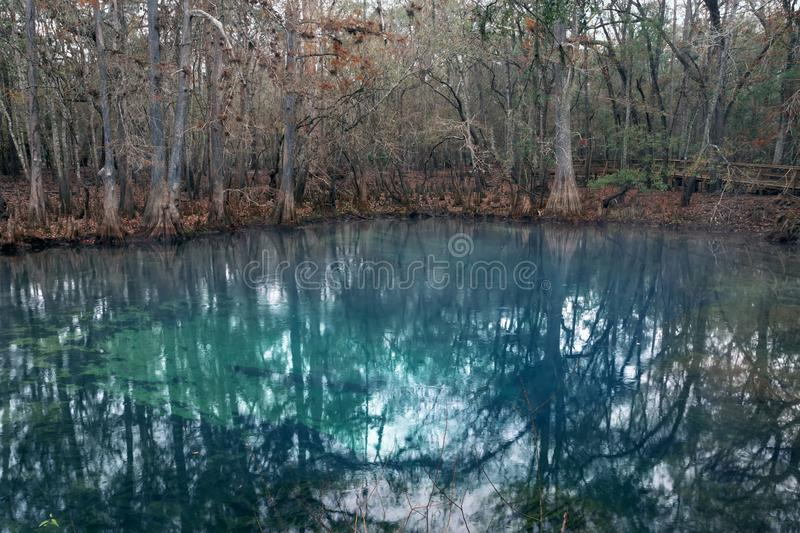 Pond with blue water in Manatee Springs State Park, Florida, US royalty free stock images