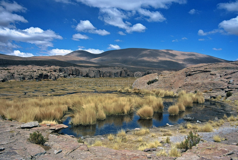 Download Pond in Bolivia,Bolivia stock image. Image of view, barren - 8586741