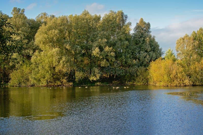 Pond com árvores em um dia ensolarado no campo flamengo, Bélgica imagens de stock royalty free