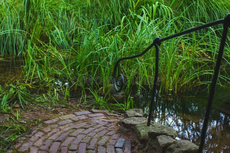 Pond com descida preta do corrimão do ferro para baixo ao reservatório imagens de stock royalty free