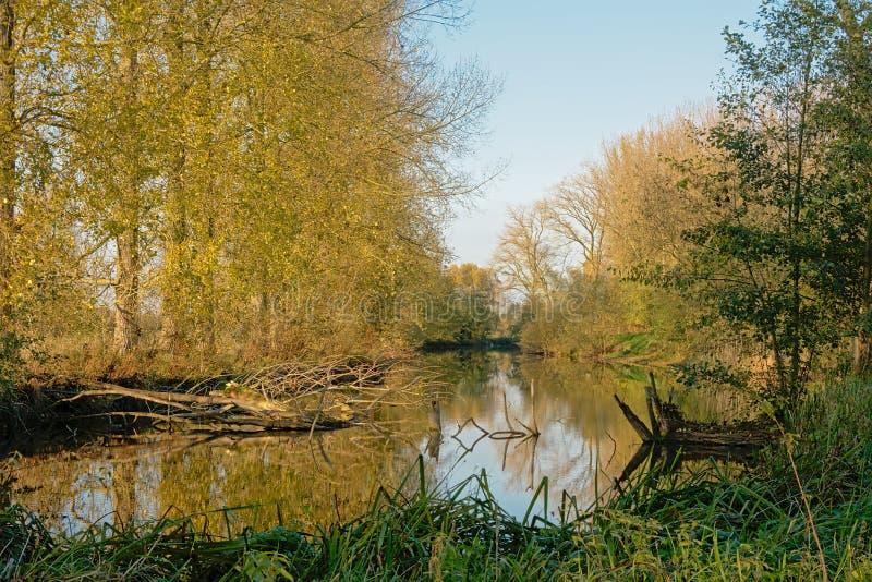Pond com junco e árvores no campo flamengo em um dia ensolarado do outono com o céu azul claro imagens de stock