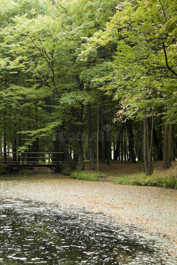 Download Pond Covered With The Fallen Down Leaves Stock Photo - Image of yellow, stream: 25758706