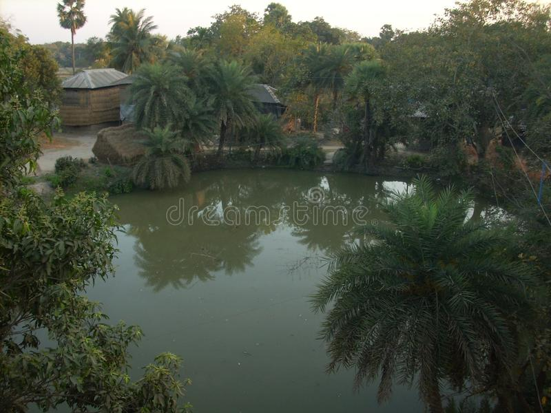 Pond and date-palms stock photo